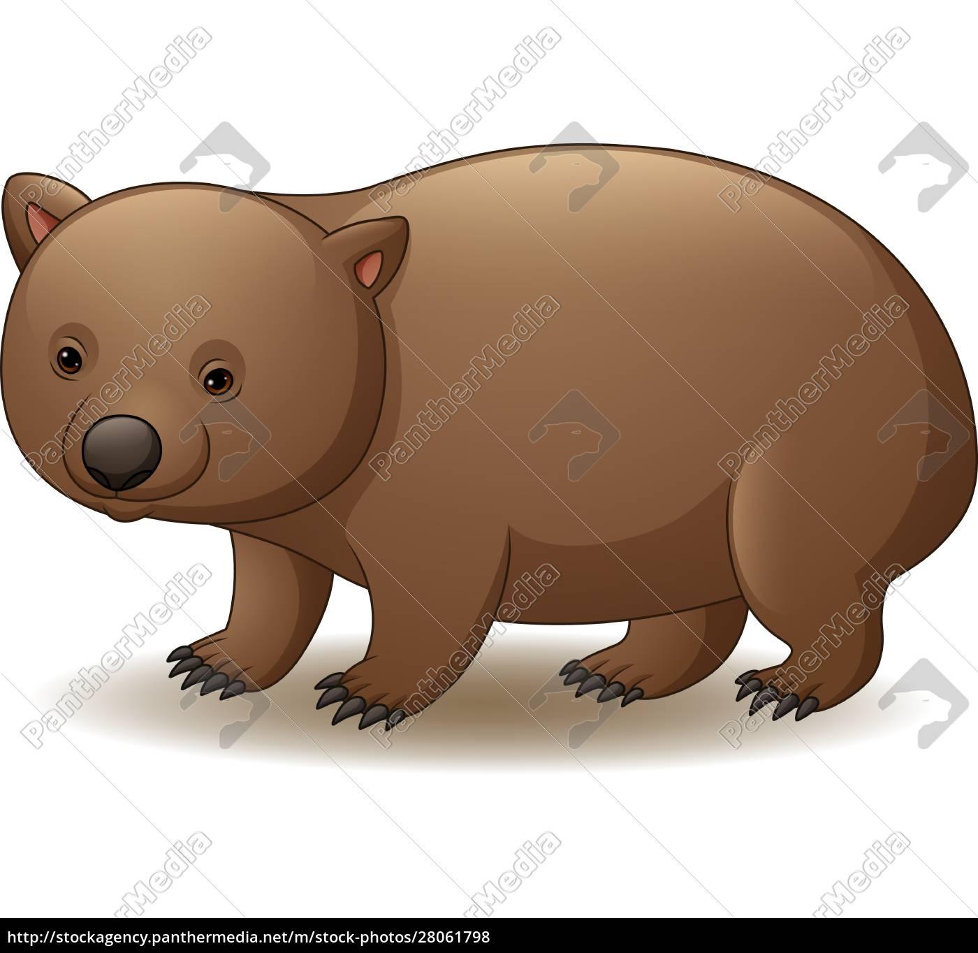 illustration, of, wombat, isolated, on, white - 28061798