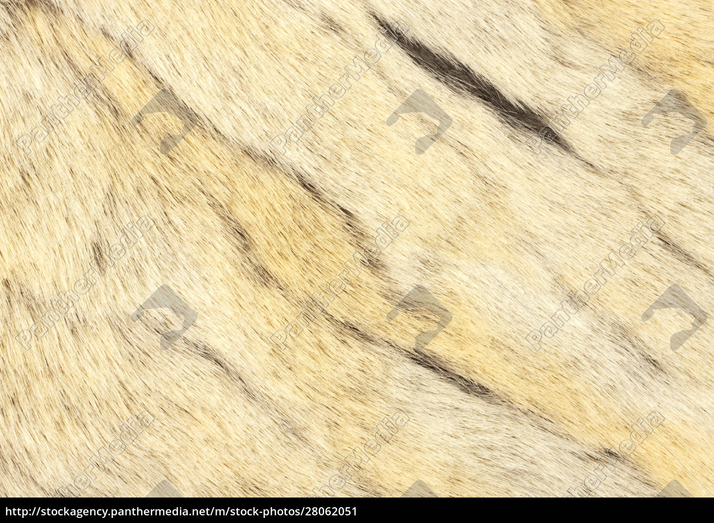 animal, fur - 28062051