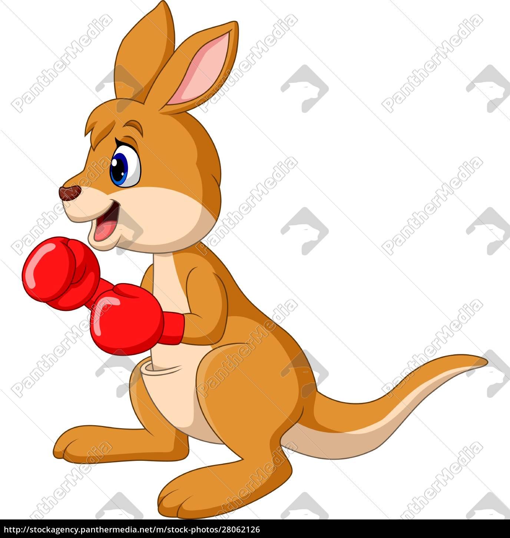 cartoon, kangaroo, boxing, isolated, on, white - 28062126