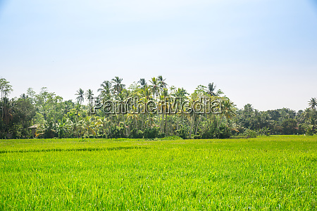 deep, jungle, forest, of, sri, lanka - 28062241