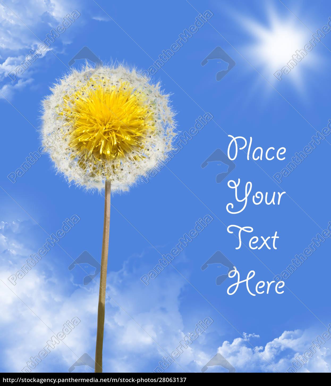 dandelion, in, sky - 28063137