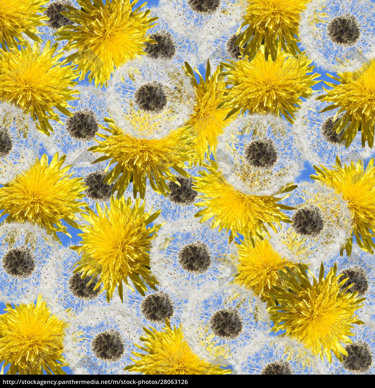 dandelions, background - 28063126