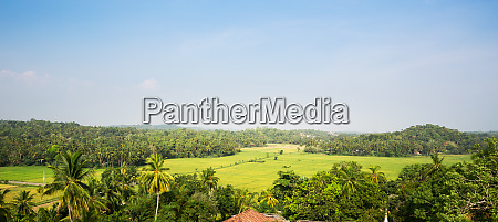 green, tropical, forest, in, a, valley - 28063202