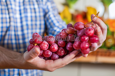 man showing a bunch of grapes