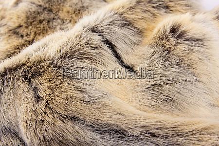 animal, fur - 28082632