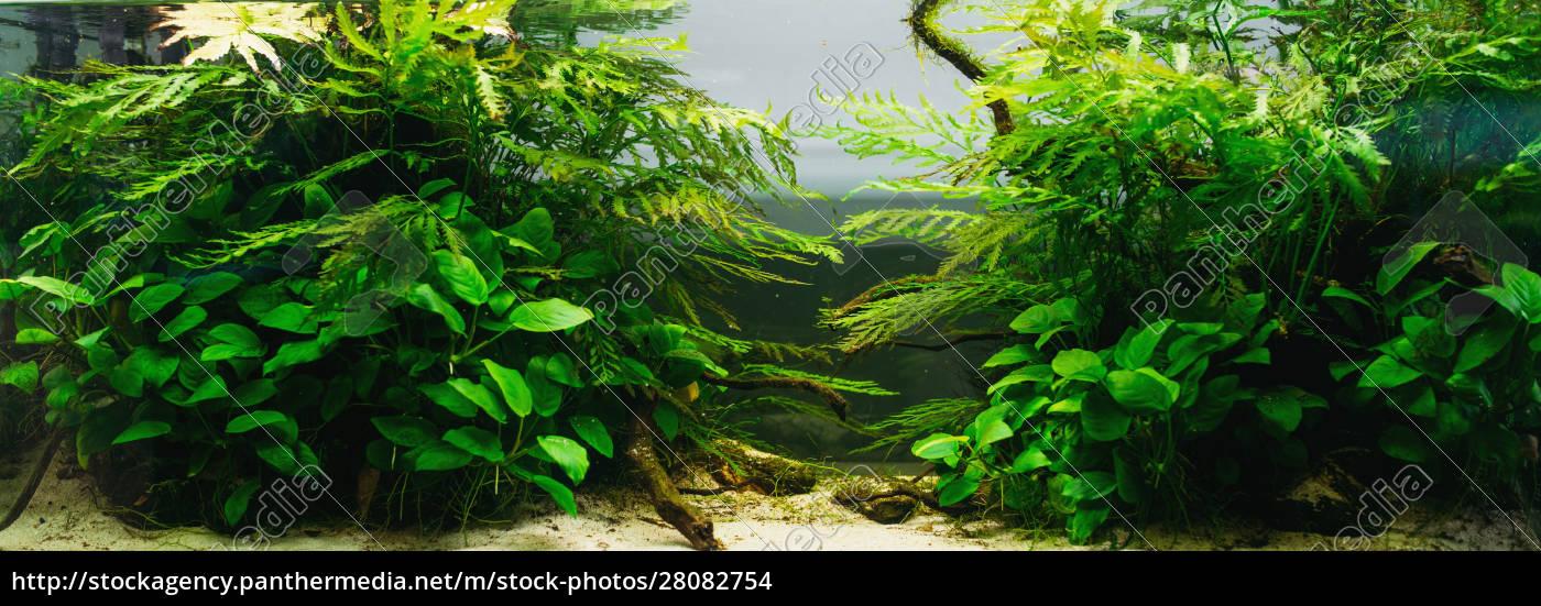 aquarium, algae, , elements, of, flora, in - 28082754