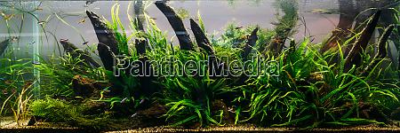 aquarium, algae, , elements, of, flora, in - 28082765