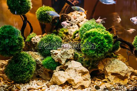aquarium, algae, , elements, of, flora, in - 28082772
