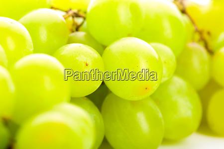 green, grape - 28082574