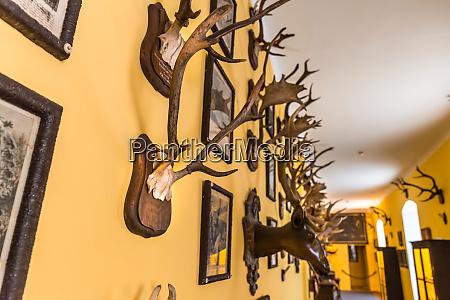 the, hall, of, trophies, , deer, antlers, - 28082535