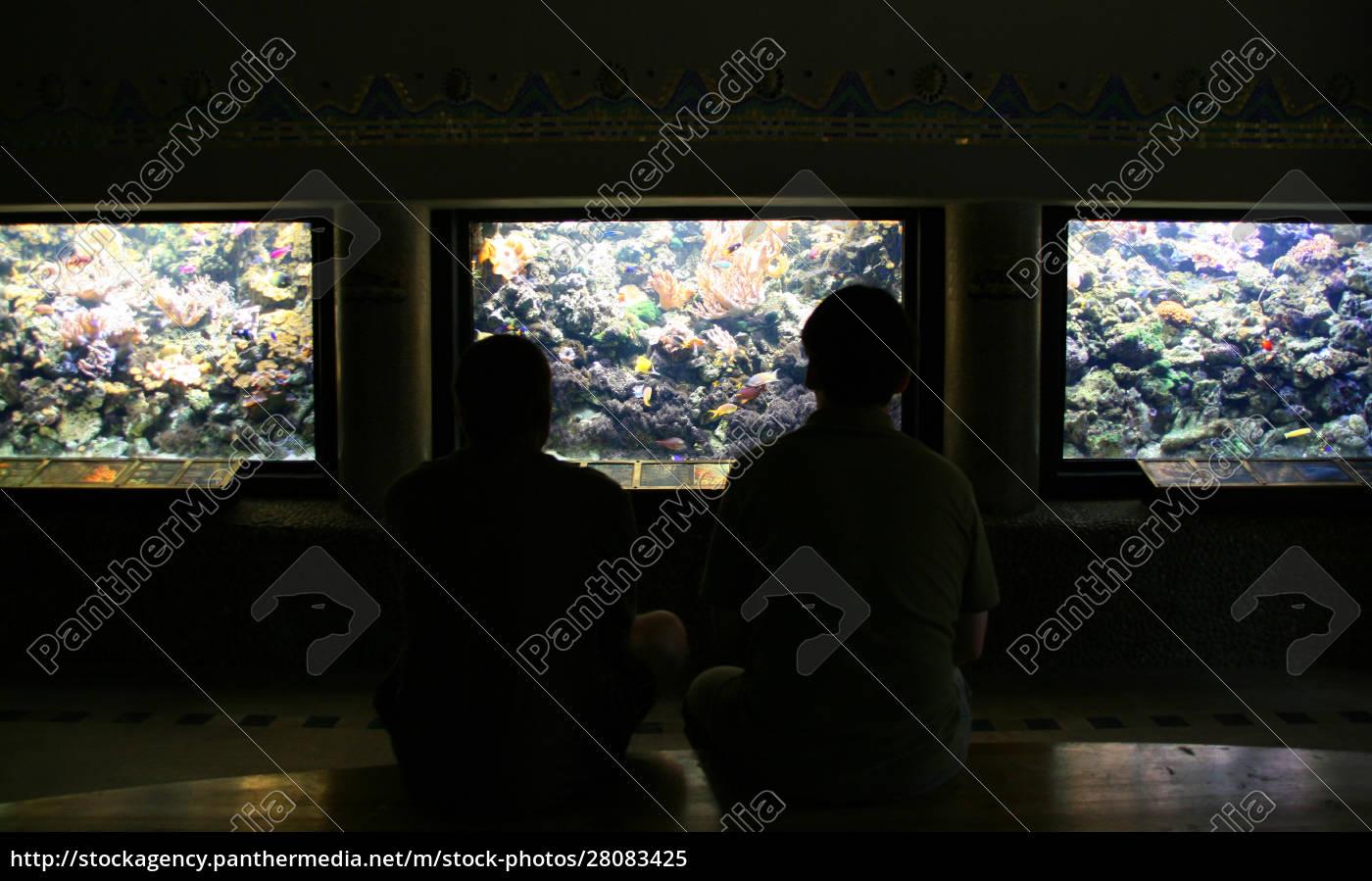 aquariums, hall - 28083425
