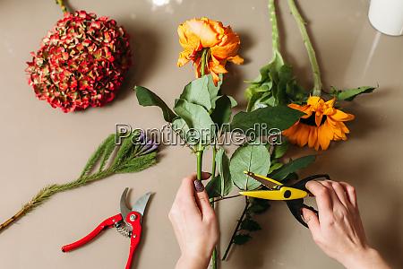 florist hands cutting rose with garden