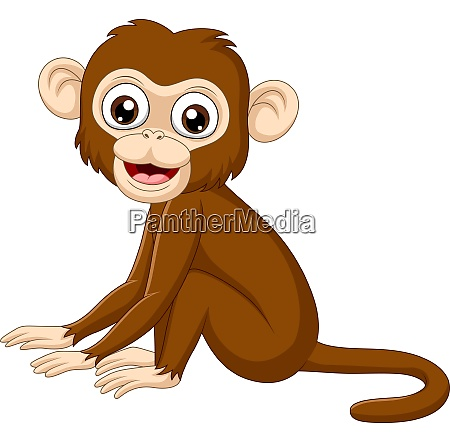 cute baby monkey sitting on white