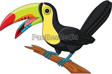 cartoon toucan bird isolated on white
