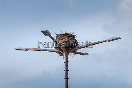 stork nest on a public lamp