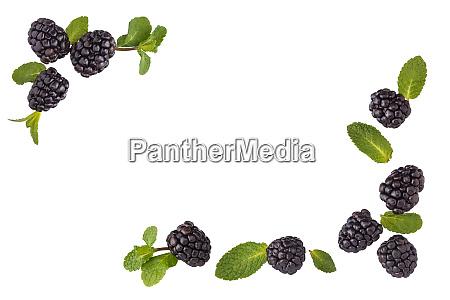 fresh blackberries border