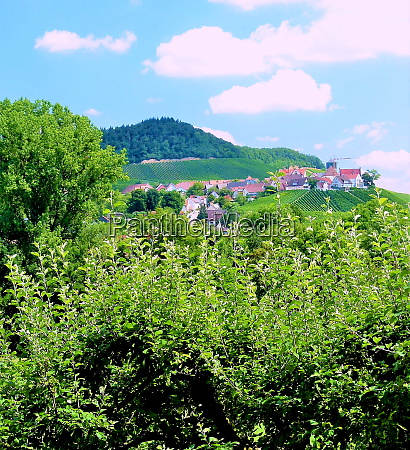 wine growing in southern germany with