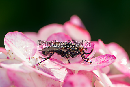 macro of a fly on a