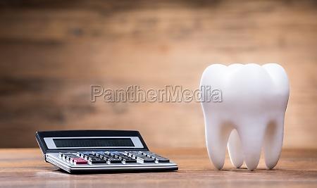 model tooth near calculator over desk