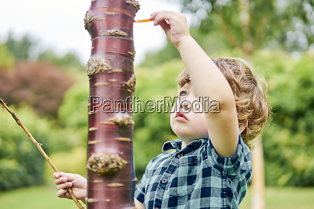 toddler discovering unusual tree in park