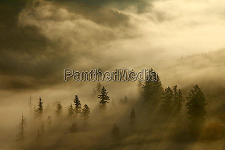 morning mist and trees in autumn