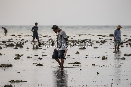 men collecting shells on the beach