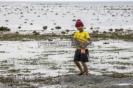 boy collecting shells on the beach