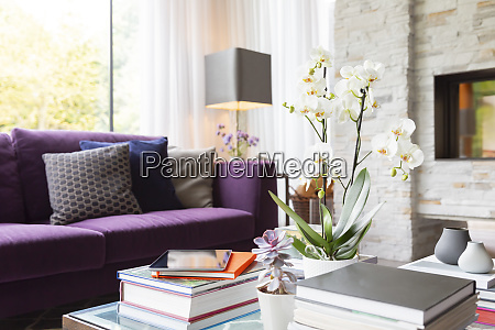 books succulents and orchid on living