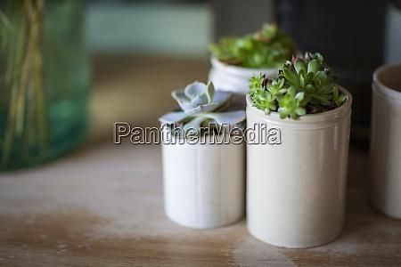 close up succulent plants in ceramic