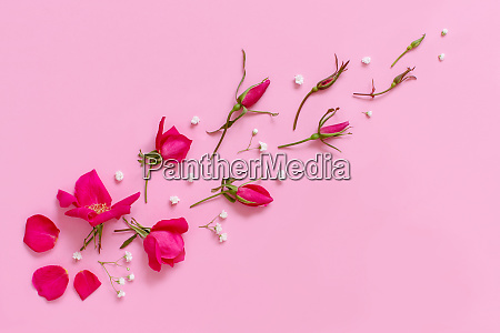 flowers and petals on a light