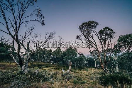 tranquil scene trees growing in alpine