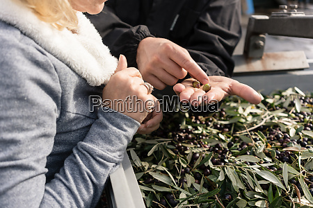 farmer showing to buyer of olives