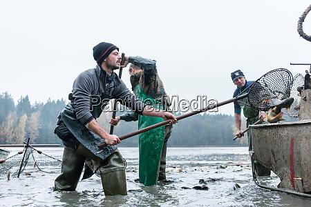 fishermen harvesting carp in a pond