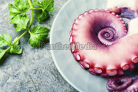 raw tentacle of an octopus