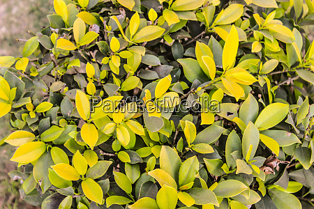 a picture of leafs in garden