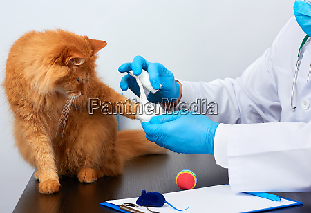 veterinarian man in a white medical