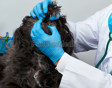male veterinarian in a white medical
