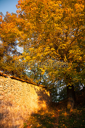 autumn foliage background yellow leaves