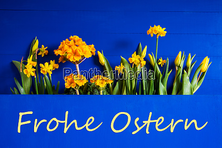 spring flowers tulip narcissus text frohe