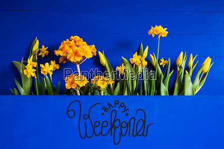yellow spring flowers tulip narcissus text