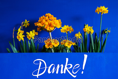 spring flowers narcissus text danke means