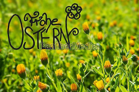 yellow flower meadow calligraphy frohe ostern