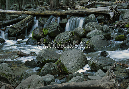cascades between boulders and tree trunks
