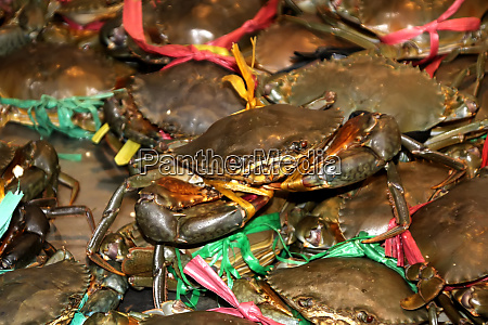 live freshwater crabs sold in phnom