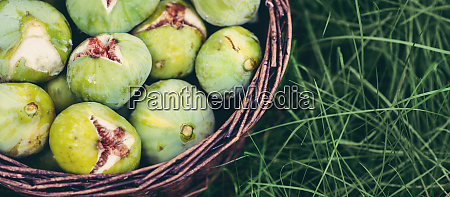 fresh green figs with green leaves