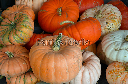 assorted colorful pumpkins