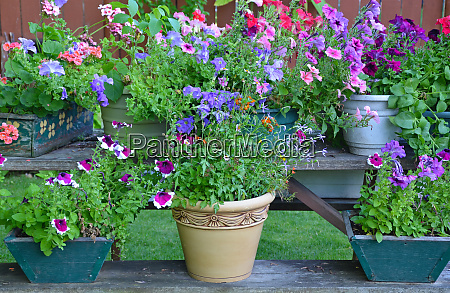 colorful summer flower planters