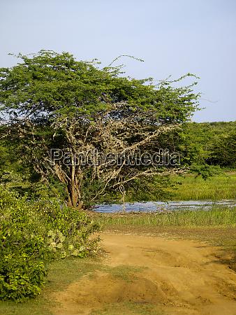 bundala national park in sri lanka