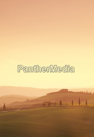 trees on hills at sunset in