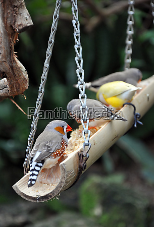 colorful finches on bird feeder